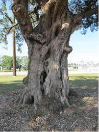 polar ent original tree by zimzim1066 on deviantart