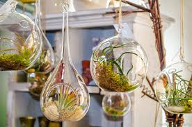 Interior Garden Plants by Hanging Glass Bubble Terrarium Air Plants Container Pots For