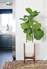 modern plant pots the 25 best large indoor planters ideas on pinterest large