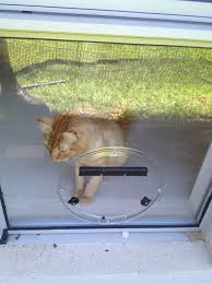 cat doors for glass doors cat doors for glass doors gallery glass door interior doors