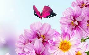 hd images of flowers flower backgrounds backgrounds hd flower computer