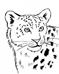 coloring pages animals crouching snow leopard coloring page