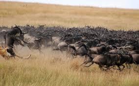 safari luxury african safari tours safaris by bushtracks