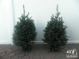 j g brands tree sales inc new york