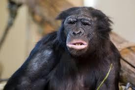 Chimp Meme - create meme skeptical chimp pictures meme arsenal com