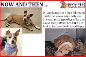 paws for life rescue troy mi 48083