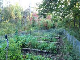backyard organic veggie farm lessons learned in our second