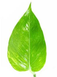 recommended indoor house plants at womansday com common houseplants