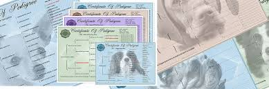 pedigree certificates pedigree forms for dogs