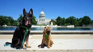 Washington traveling with pets images Dsc04092 800x450 jpg jpg