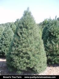 wholesale trees