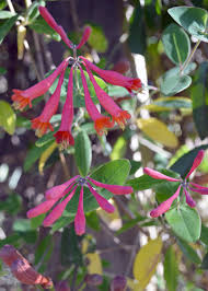 native plants in landscape management attract hummingbirds with native plants mississippi state
