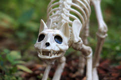 skeleton is standing near sign stock photography image 26480282