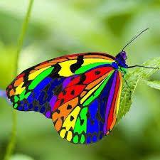 flowers butterflies home