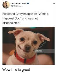 Disappointed Dog Meme - jesse mclaren searched getty images for world s happiest dog and was