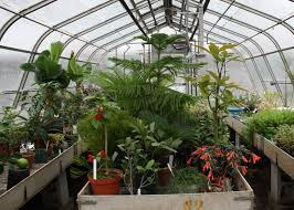 Plants In House Berkshire Botanical Garden Caring For Plants In A Greenhouse Or
