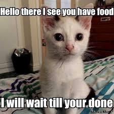 Make Your Own Cat Meme - make your own ninja cat meme