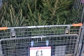 b u0026q chester christmas trees on sale for 1 chester chronicle