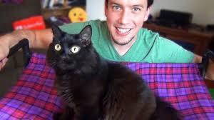 Homemade Cat Hammock by Diy Cat Hammock Upgrade Easy Cheap Youtube