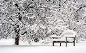snow white bench lovely nature peaceful pretty trees winter