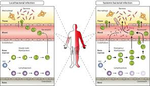 Types Of Bacterial Diseases In Plants - demand adapted regulation of early hematopoiesis in infection and