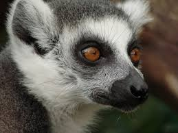 madagascar free stock photos download 21 free stock photos