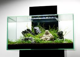 i usually don t like decorations in my tanks but i m really