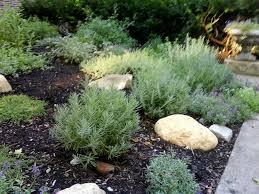 How To Keep Mosquitoes Away In Backyard 7 Mosquito Repellent Plants Garden Design
