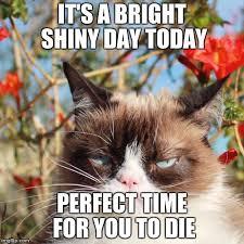 New Grumpy Cat Meme - new grumpy cat memes imgflip