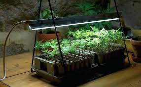 Best Light For Growing Plants Indoors How To Grow Houseplants In