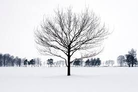 lonely tree silhouette in winter park stock image image 9055661
