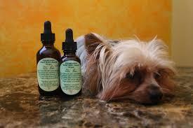 yorkie hypoglycemia relief multivitamin drops 100 natural