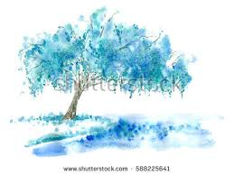 weeping willow stock images royalty free images vectors