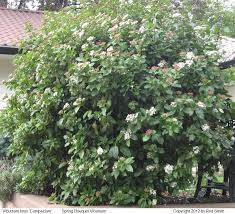 Flowering Shrubs For Partial Sun - shrubs by flowering season and height