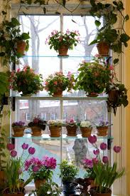 209 best indoor blooming plants images on pinterest plants