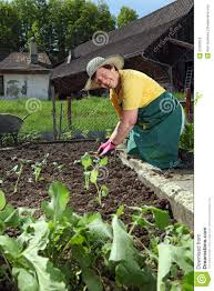 grandmother planting vegetables stock photo image 25362018