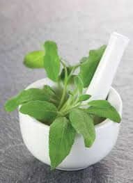 grow a garden with healing herbs and plants grow herb companion