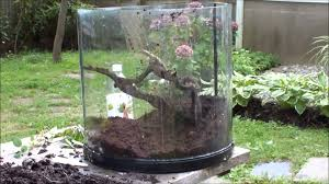 Cool Tree by Green Tree Frog Vivarium Build Youtube