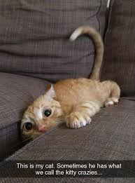 Sleepy Kitty Meme - nice 21 sleepy kitty meme wallpaper site wallpaper site