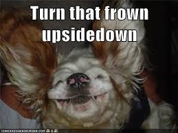 Frowning Dog Meme - i has a hotdog upside down dog funny dog pictures dog memes
