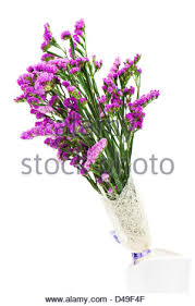 statice flowers statice flower bouquet in the vase statice flower stock photo