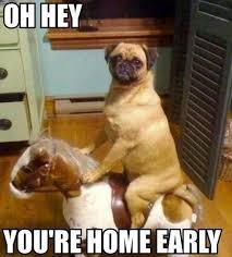 Who Let The Dogs Out Meme - 20 best who let the dogs out images on pinterest funny animal