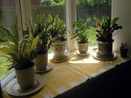 best indoor plants for low light indoor houseplants indirect