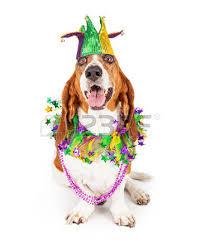 mardi gras jester ribbon dog happy mardi gras stock photos royalty free business images