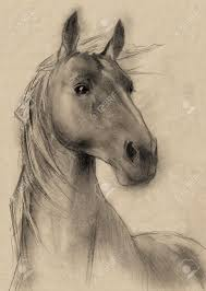 freehand horse head pencil drawing stock photo picture and