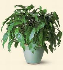 plant delivery srilankaflorist sri lanka plants for the home or office