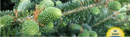 cartner christmas tree farm trees for troops
