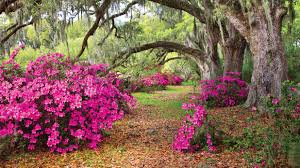 Azalea Topiary These Must Visit Botanical Gardens Will Give You Spring Fever