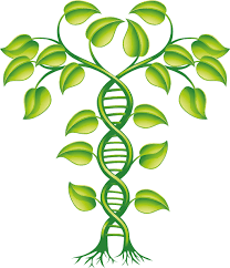 images of plants protein structure database will help to uncover unknown functions