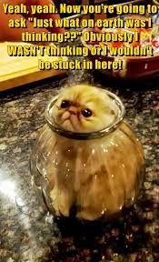 Thinking Cat Meme - lolcats thinking lol at funny cat memes funny cat pictures
